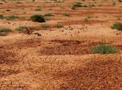 Mongolia Interna deserto spaventa Cina