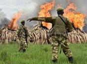 Kenya, rogo grande riserva avorio: guerra bracconieri