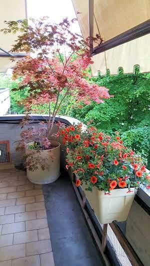Terrazzi e balconi fioriti - Paperblog