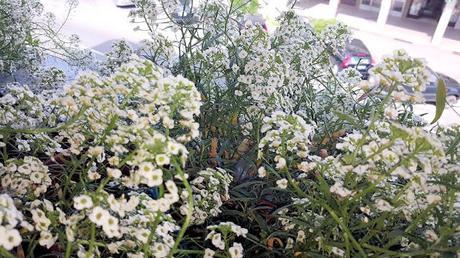 Terrazzi e balconi fioriti paperblog for Terrazzi fioriti