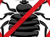 scarafaggi casa: principali motivi