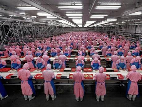"""I dipendenti dei """"polli"""" dovranno mettere il pannolone!"""
