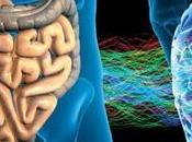 microbiota intestinale mantiene sana mente l'aiuto sistema immunitario
