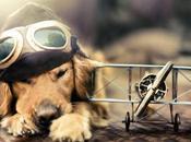 Possiamo davvero volare insieme nostro cane sugli aerei linea? Bufala equivoco?