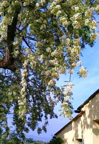 I 10 post pi visti in maggio paperblog for Regali per venticinquesimo
