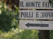presento L'Azienda Agricola Monte Fato