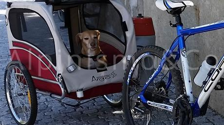 08-viaggiare-cane-mountain-bike