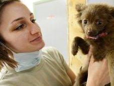 Vaccinazioni cani: sono sempre innocue?