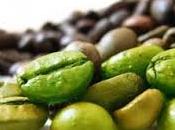 ricerche hanno confermato proprietà benefici sull'organismo caffè verde