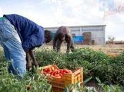 Approvato disegno legge contro caporalato agricoltura
