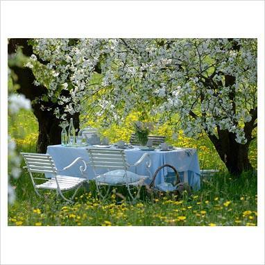 382 x for Alberi per piccoli giardini