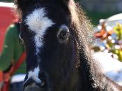 Cavalli agropoli striscia notizia