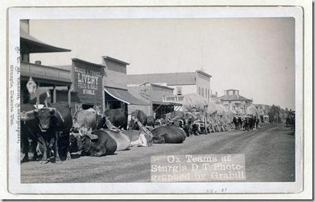 Title: Ox teams at Sturgis, D.T. [i.e. Dakota Territory] Line of oxen and wagons along main street. [between 1887 and 1892] Repository: Library of Congress Prints and Photographs Division Washington, D.C. 20540