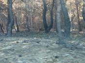 terra arsa