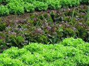 Quanto risparmia coltivando piccolo orto?