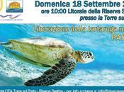 Liberazione della tartaruga marina alla Riserva Naturale Sentina (Ap)