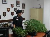 Ancora erba Crotonese, scoperti marijuana Isola Rizzuto