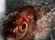 pesce sono? L'app dice