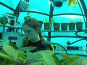 L'unica farm subacquea pianeta, Nemo's Garden Noli