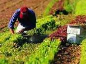 Coldiretti lancia l'allarme: degli italiani mangia cibi scaduti