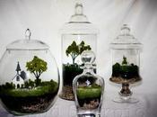 terrarium: consigli realizzare mondo gotico miniatura