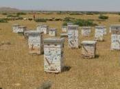 L'apicoltura fermerà deserto!