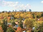 Città: Alberi boschi rendono pulite, fresche, belle!