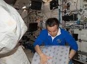 Coltivazione lattuga cavolo sulla Stazione spaziale Internazionale