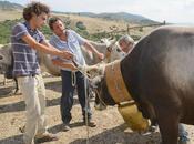 """""""scasatora"""", campana grande della mucca capo branco"""
