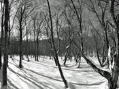 Suggerimenti fotografare foreste
