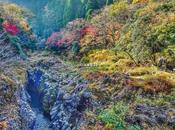 "Momijigari, caccia foglie rosse"" Giappone"