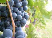 Itinerario vino Estremadura: viaggio indimenticabile