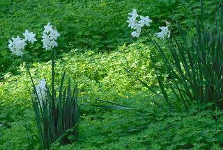 scorci dai giardini Hanbury alla Mortola