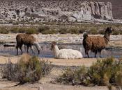 Viaggio Bolivia: Riserva Nazionale Eduardo Avaroa Salar Uyuni