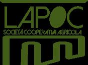 Olivo Olio: nuovo corso avanzato proposto dalla Lapoc Reggio Calabria