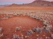 Cerchi delle Fate della Namibia sono mistero. Quando scienza riesce superare fantasia.