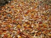 Eredità dell'autunno poesie traduzioni
