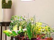 Chlorophyll: lampada coltivazione indoor!