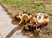 miei gatti giorni della merla