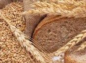 Cereali integrali: perché aiutano dimagrire?