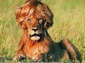 Elenco ragionato delle passioni cosmetiche future (hair)