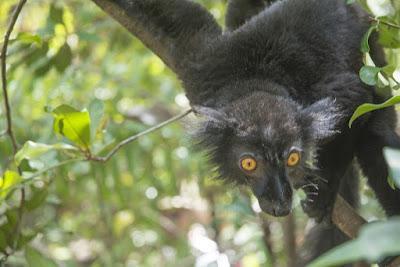 Madagascar 30: L'arcipelago