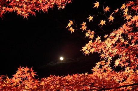 Autunno al Nison-in di Arashiyama