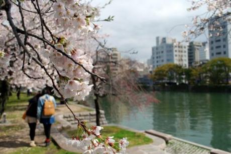 Quando andare in Giappone? Ciliegi in fiore al parco della pace di Hiroshima