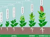 quinoa riuscire risolvere problema della fame Mondo