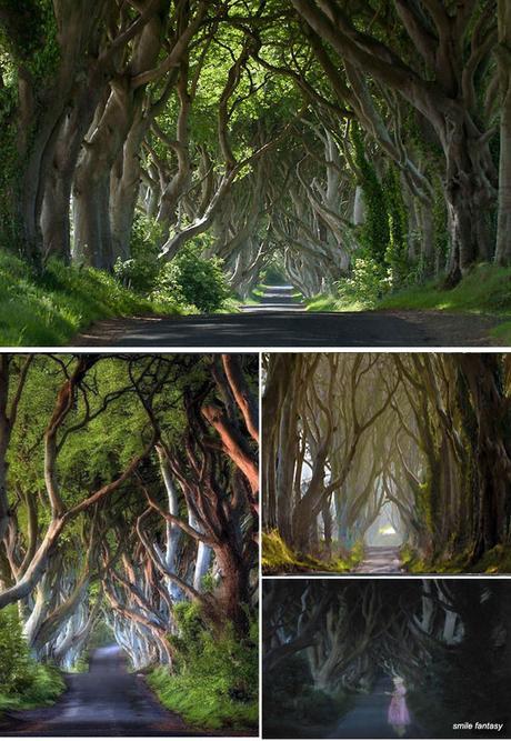 The Dark Hedges uno spettacolare viale Irlandese