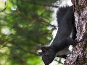 Scoperto nuovo mammifero Italia: scoiattolo meridionale. Vive solo