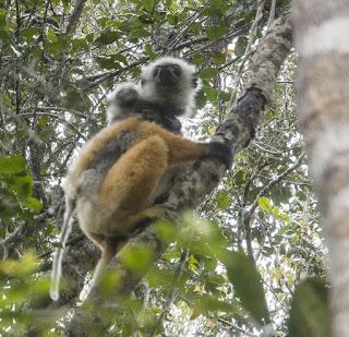 Madagascar 36: Tirando le somme.