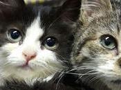 #aiutiamoadaiutare Cucciole gatto cerca casa. Impossibile innamorarsene prima vista #NOI... 🐶🐱🐶🐱🐶🐱... MIGLIORI AMICI Monteverde...