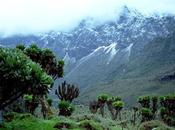 Parco Nazionale Monti Rwenzori
